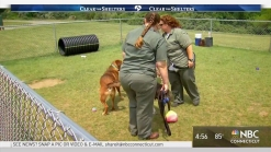 Tails of Courage Gives Animals and Inmates a Second Chance