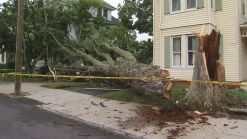 Afternoon Storms Topple Trees And Headstones Along The Shoreline