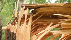 Residents Deal with Storm Damage Cleanup
