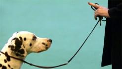 Dog Whisperer: Leadership is in The Leash