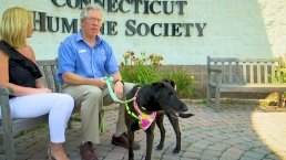 CT LIVE!: Meet Buddy the Dog Ahead of 'Clear the Shelters'