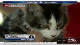How to Foster Animals for CT Humane Society