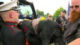 Cena the Military Dog's Final Farewell