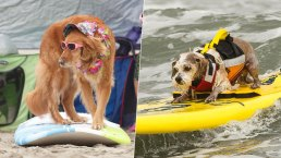Paw-abunga! Wave-Riding Dogs Compete in Surfing Competition