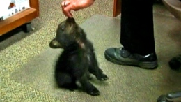 Oregon Police Host Orphaned Bear Cub
