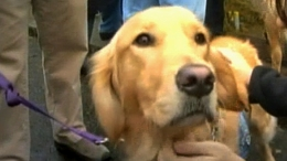 Dogs Bring Comfort to Newtown