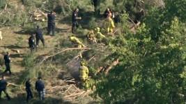 Falling Tree Injures 8 Children Outside Summer Camp