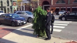 Cops Root Out Maine Roadblock: Man Dressed as Tree