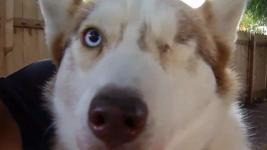 Veteran Who Tortured Neighbors' Dogs Sentenced to Prison