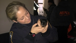 10 Yorkie Puppies Rescued From NYC Puppy Mill: Police