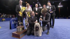 Skye Terrier Won Best in Show at the 2015 National Dog Show