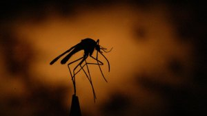 CT's First Human Case of West Nile Virus Identified for 2016