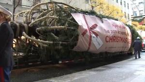 'Tis the Season! 2018 Rockefeller Center Christmas Tree Arrives
