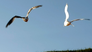 Massachusetts Man Sues Neighbor Over Seagull Mess