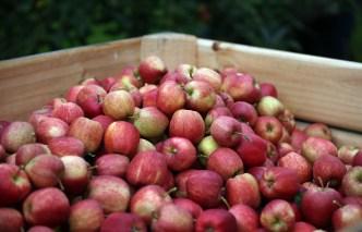 Healthier Apple Cobbler
