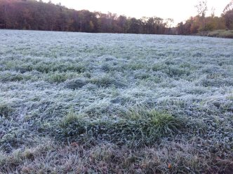 First Frosts are Getting Later and Later