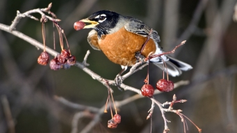 Drunk Flying: Minnesotans Call Cops on Buzzed Birds