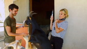 Ashley Roberts Cares for the Animals of Farm Sanctuary