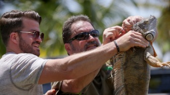 Johnny Bananas: Iguana Hunter