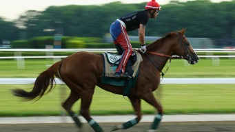 Triple Crown Winners Ready for New Champ