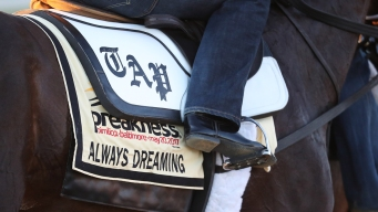 How a Racehorse Gets Its Name