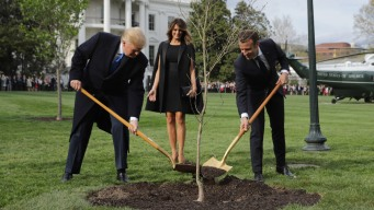 France Roots Out Why Trump-Macron Friendship Tree Vanished