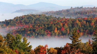 Connecticut May See Early Fall Foliage