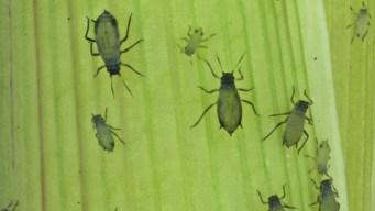 US Military's Bug Gene-Altering Program: Boon or Bioweapon?