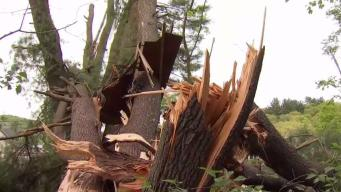 Beacon Falls Ravaged by Recent Storms