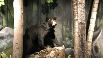 Woman, 71, Survives Bear Attack in Her Kitchen