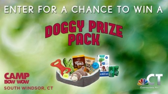 Camp Bow Wow Clear the Shelters Contest