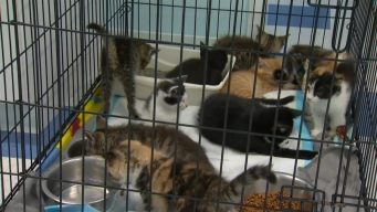 Clear the Shelters Kitty Cam