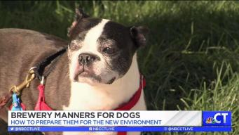CT LIVE!: Brewery Manners for Dogs