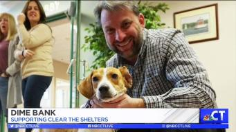 CT LIVE!: Clear the Shelters with Dime Bank