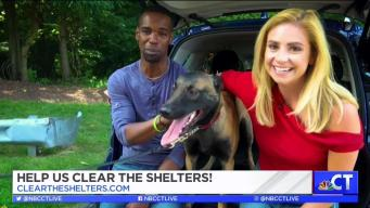 CT LIVE!: Clear the Shelters with Nissan