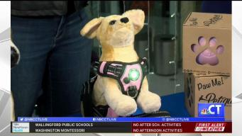 CT LIVE!: Keep Your Pets Safe this Thanksgiving