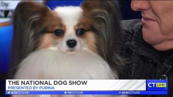 CT LIVE!: The National Dog Show Preview