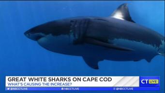 CT LIVE!: What's With All the Sharks on Cape Cod?