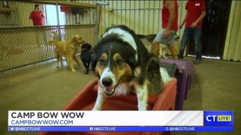 CT LIVE!: Your Dog's First Day at Camp Bow Wow