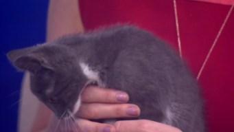 Cute Kitten, Funny Name