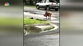 The Story Behind the Hurricane Harvey Viral Dog Photo
