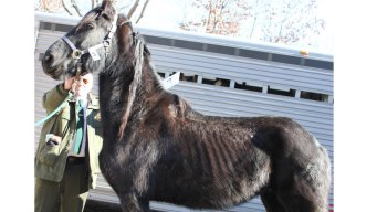 Fundraising Continues For Neglected East Hampton Horses