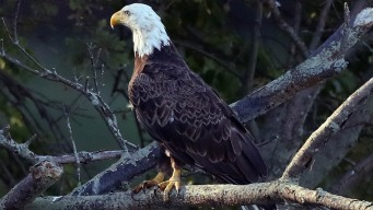 17 States Sue Feds Over Endangered Species Act Rules