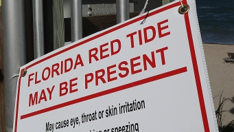 Toxic Red Tide Appears to Have Faded From Florida's Waters