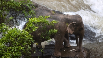 6 Elephants Die at Thai Park Trying to Save Fallen Calf