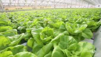 Largest Rooftop Greenhouse in World Is in Chicago
