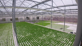 Hydroponics Could Offer Solution for Climate Change Effects on Farming