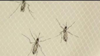 4 More Human Cases of West Nile Virus Reported in Connecticut