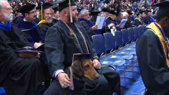 Service Dog Steals Show at College Graduation