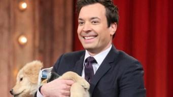 Puppies Pick Oscars' Best Picture Winner